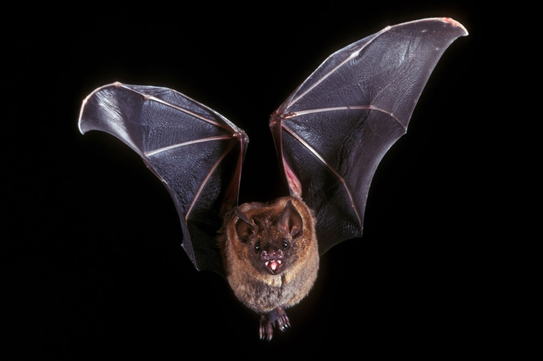 What the Bible Says About theBat